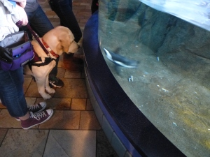 service dog, meet penguin
