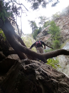 climbing over boulders and downed trees to get closer to the waterfall - we brought hiking sticks on this trip to Big Sur, and it made all the difference (as is usually the case when you have the right tools for the job)
