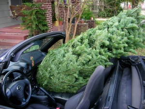 and where it might snow one day, and the next you can put the top down to bring home a Christmas tree