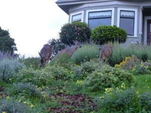 saw these dudes in this yard when we were walking back from dinner