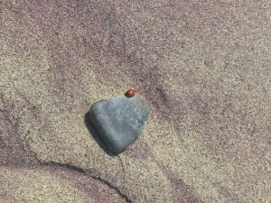 the elusive beachside ladybug--notice the red sand mixed with the regular sand