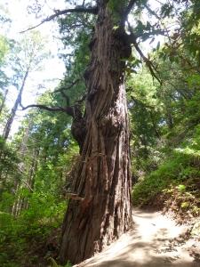 disneytree