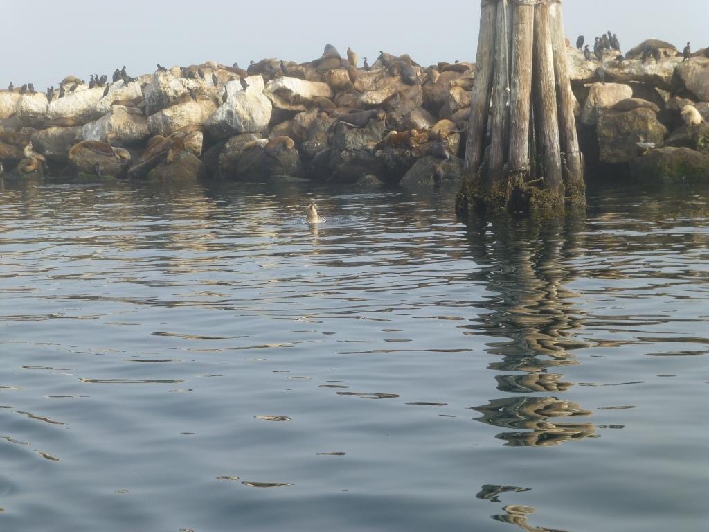 Seals and Crofts