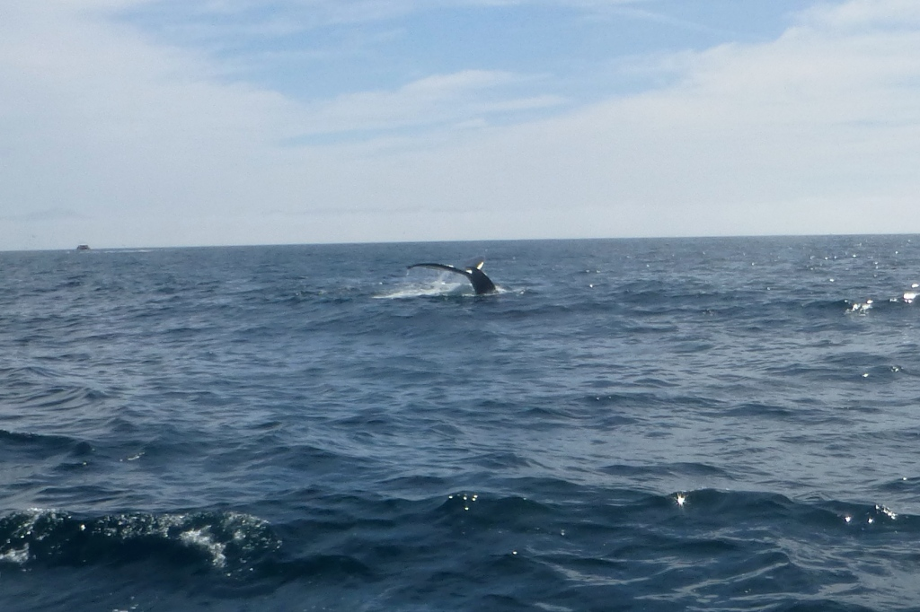 whale tail - zoomed in