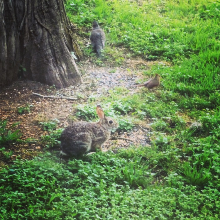 And wee rabbits.