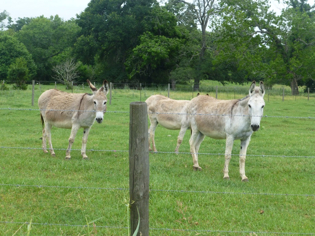 And donkeys.